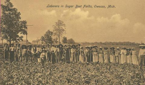 Sugar Beet Workers Circa 1910